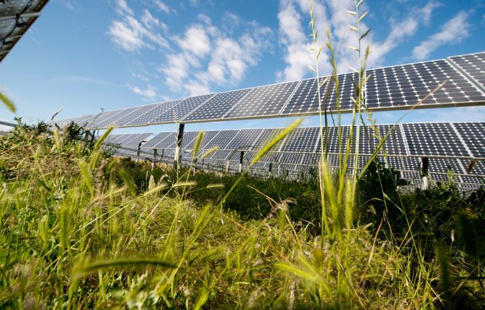 Tre motivi per cui il solare avrà un ruolo nella ripresa e garantirà un futuro più verde